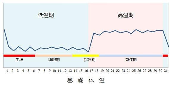 正常な女性の基礎体温グラフ