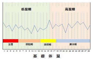 基礎体温のガタガタグラフ