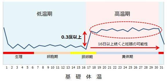 基礎体温のグラフの見方